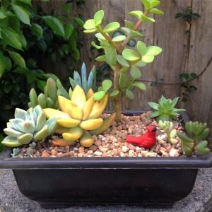 Cardinal Succulent arrangement