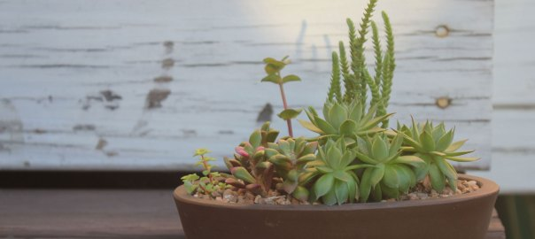 Hens and Chicks arrangement by Sucs for You!