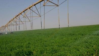 Photo of بتكلفة بلغت أكثر من 19 مليار جنيه ولاية الخرطوم توقع مع شركة زادنا عقد تنفيذ منظومة الإنتاج الزراعي المتكامل