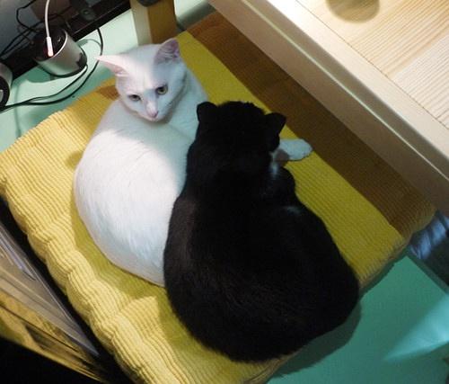 黑貓警長和白貓警探 | 蘇打蘇塔設計量販鋪 - sudasuta.com - 每日分享創意靈感!