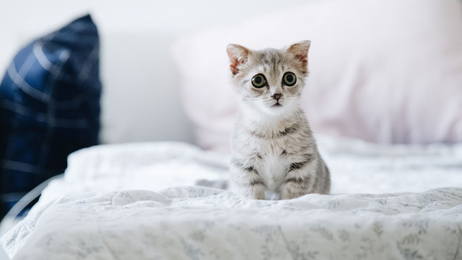 Get To Know The Cutest Cat Breeds On The Planet Suddenly Cat Cute Cat Things For Cute Cat People