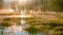 sunlight seen reflected across a wetland or swamp