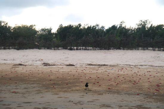 Crow crabs
