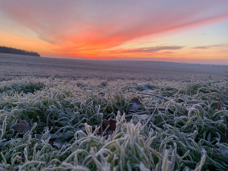 winter morning , landscape with frost covered grass