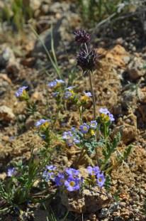 Mojave National Preserve 191