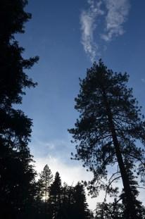 Mighty Trees (1)