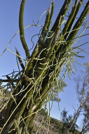 Ouch and Other Desert Plants (7)