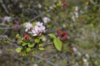 Cherry Blossom #1