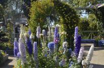 The Flower Fields (5)
