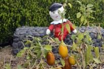 Humpty Dumpty guarding the eggplant