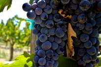 Southern California's Wine County (4)