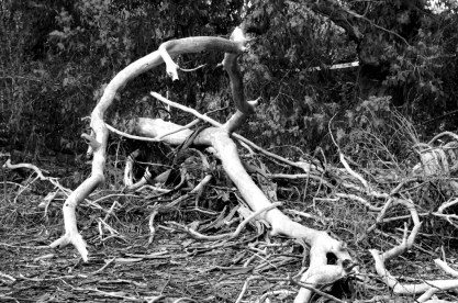 Battling branches