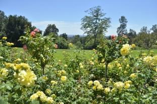 Huntington's Garden Colors (10)