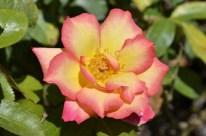 Huntington's Garden Colors (4)