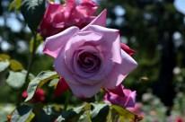 Huntington's Garden Colors (6)