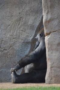 Safari Park (7)