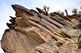 Hiking Andreas Canyon, part 1 of 2 (14)
