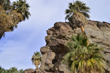 Hiking Andreas Canyon, part 1 of 2 (5)