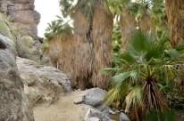 Hiking Andreas Canyon, part 1 of 2 (9)
