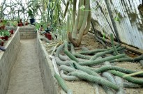 Visiting the World's First Cactarium (6)