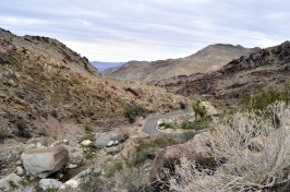 West Fork Trail and Palm Canyon (13)