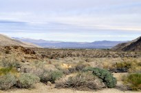 West Fork Trail and Palm Canyon (2)