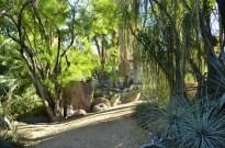 Moorten Botanical Garden, part 3 (2)