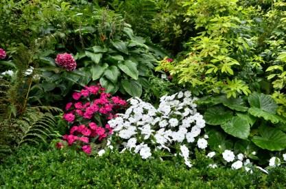 Portland Rose Garden, part 3 (11)
