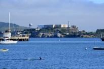 Swimmer with Alcatraz Island, the former prison, in background