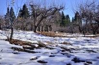oak-glen-with-snow-part-1-3