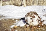 oak-glen-with-snow-part-1-7