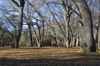oak-glen-with-snow-part-2-6