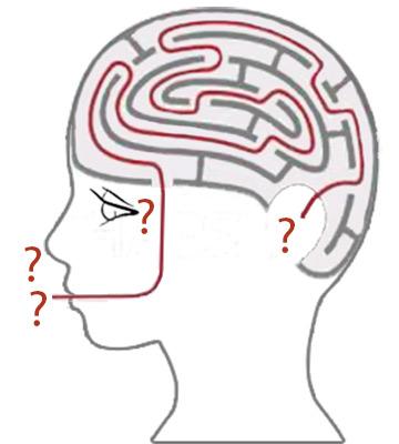 Complex Thinking Brain Maze
