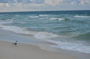 bird at oceans edge