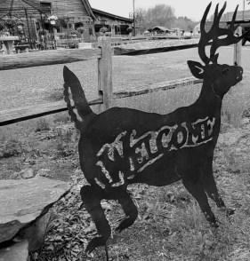 deer, welcome sign