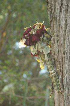 roses on tree