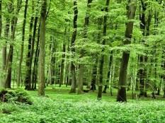 Alles so schön grün hier ...