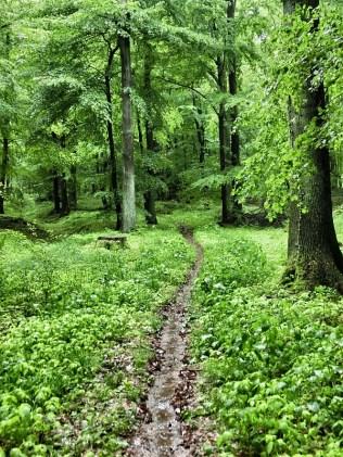 Trail am Bosenberg