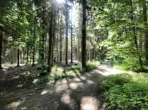 Waldidylle beim Söhrer Forsthaus
