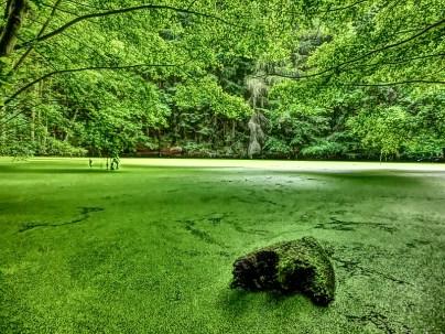 Teich im Maiental