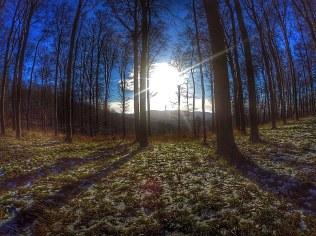 01_09 Salzdetfurther Wald 02