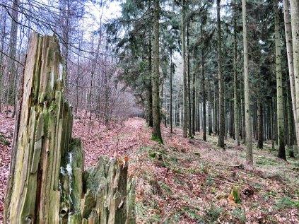 2017_02_19-09h03m14s - Turmberg