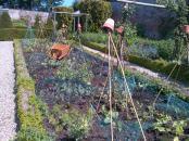 Kitchen Vegetable garden.