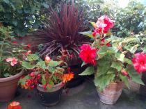Colourful Corner