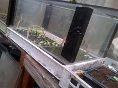Cabbage and Leek and Tomatoes growing in home made propagators