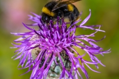 Bees-8629