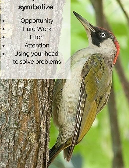 The Woodpecker – Opportunity Knocks