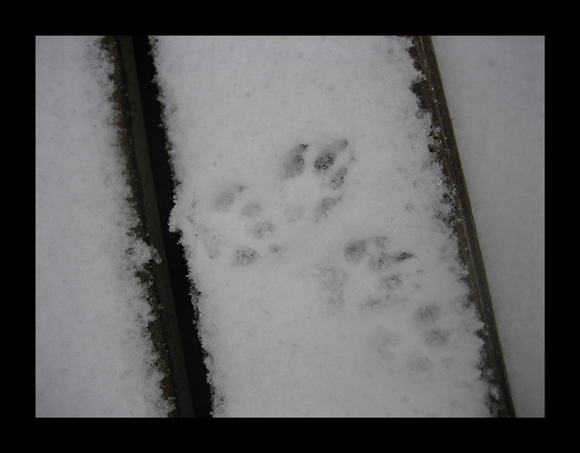img_0511-snow-prints.jpg