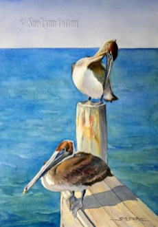 Brown Pelicans Anna Maria Island $99