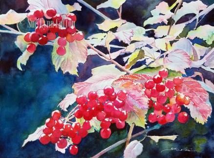 Cranberry Bush in Fall $125